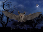 Spooked_Bat